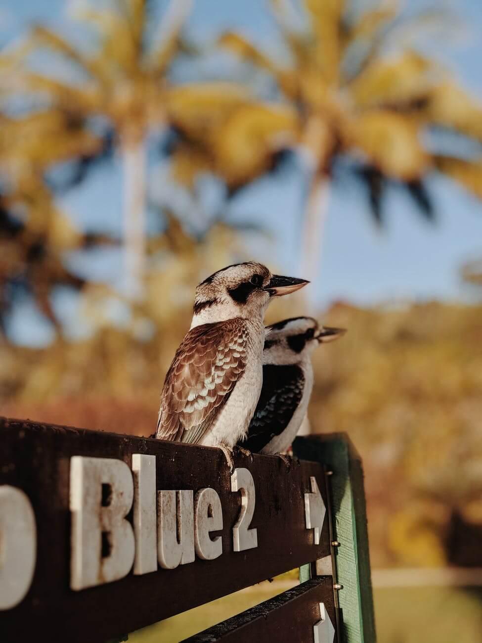 Bird Board Games (4+1 bonus) in case you are fond of birds